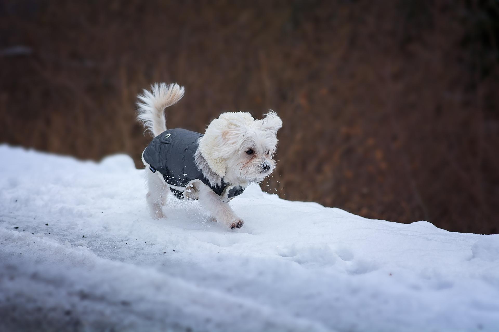ir a la nieve con perro abrigo