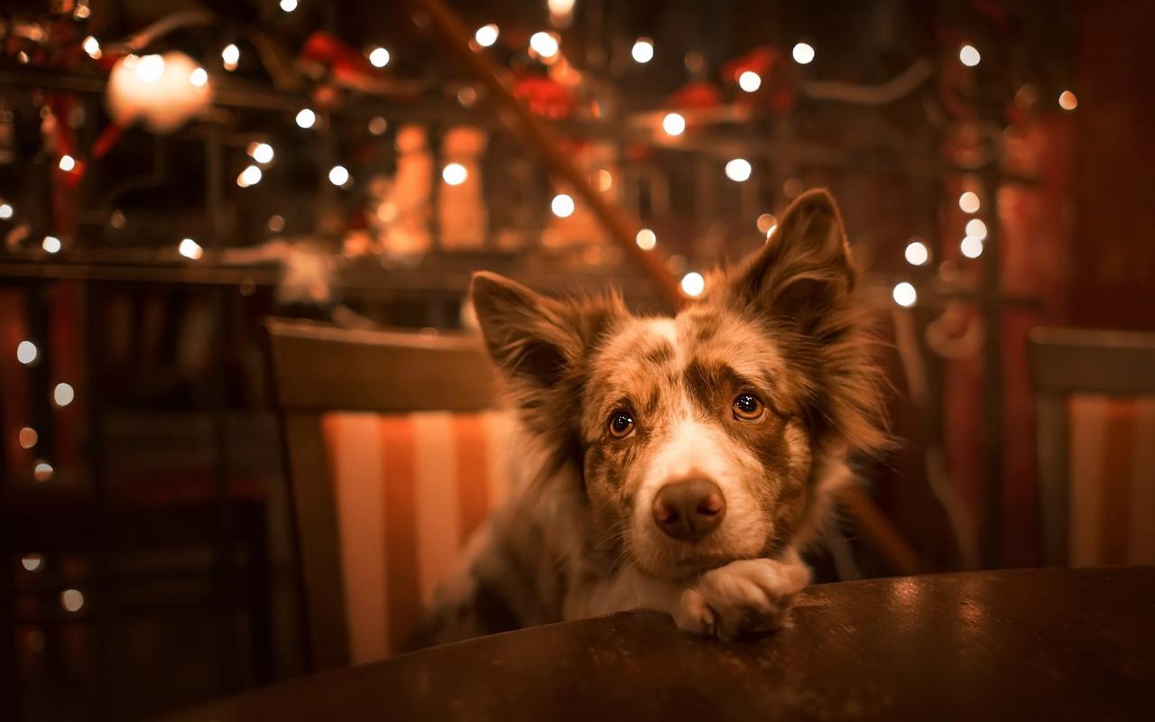 qué piensan los perros luces