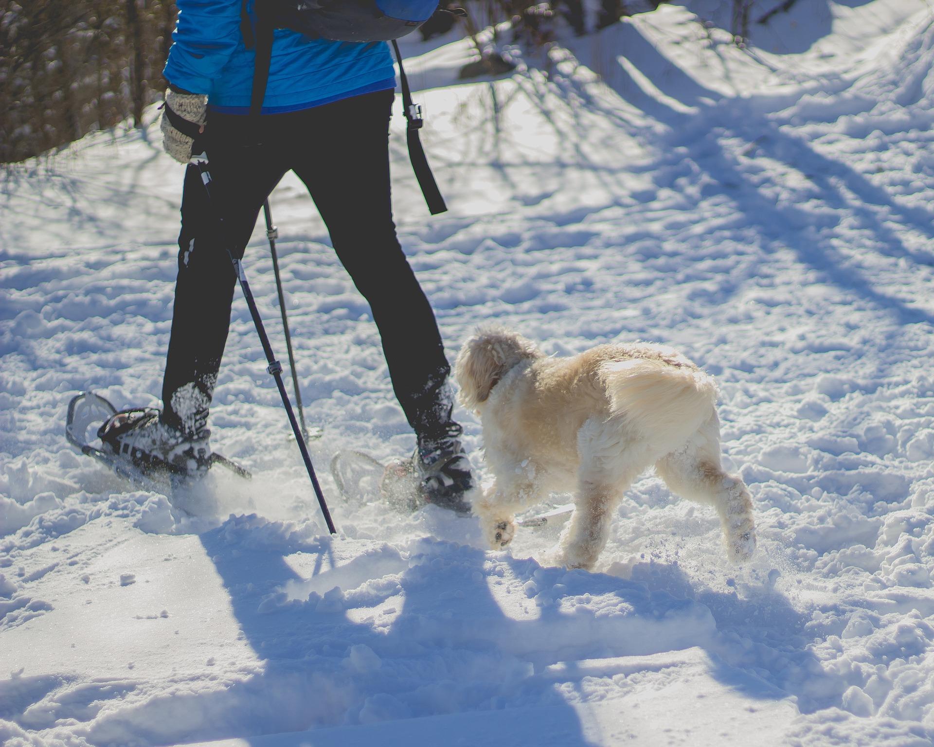 ir a la nieve con perro seguridad