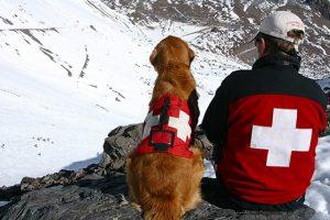 perros de rescate guía
