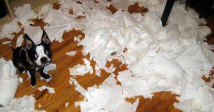 perros solos papel higiénico