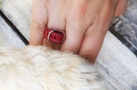 compromiso con tu mascota anillo