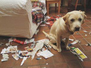 perros solos romper papel