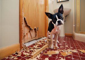 perros solos morder muebles