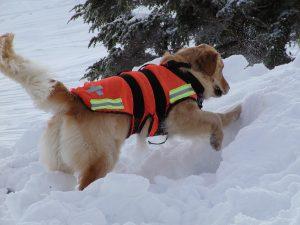 perros de rescate olfato