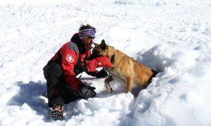 perros de rescate sierra nevada
