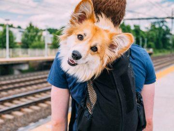 semana santa con perro