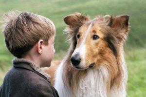 perros actores lassie
