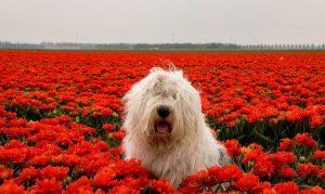 dia mundial de la naturaleza flores