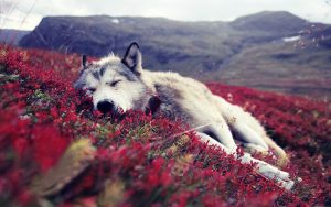 dia mundial de la naturaleza perro
