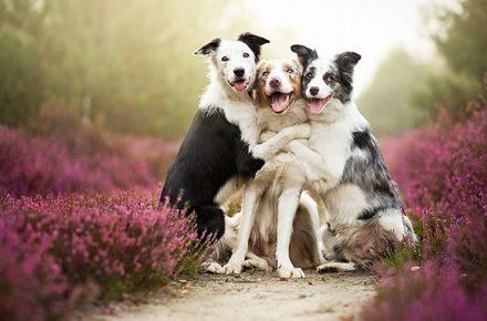 dia mundial de la naturaleza perros