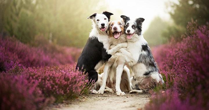 DÍA MUNDIAL DE LA NATURALEZA: Cómo disfrutar de ella con tu perro