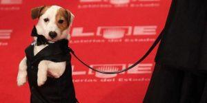 perros actores pancho
