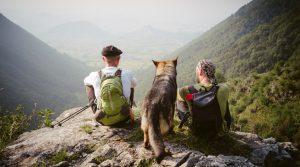 planes semana santa perros