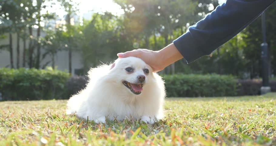 cómo tocar a los perros