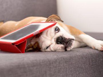 productos tecnológicos para perros