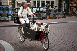 ciudades más dogfriendly