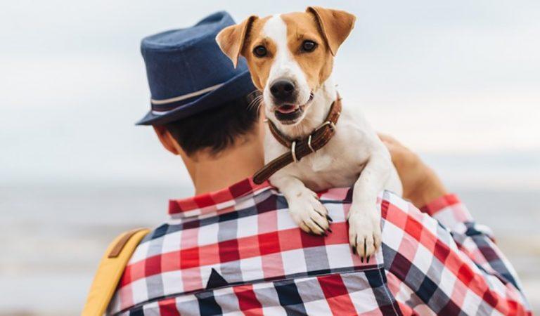 DÍA DE LA TIERRA: Descubre 4 de las ciudades más dogfriendly para viajar con tu perro por el mundo