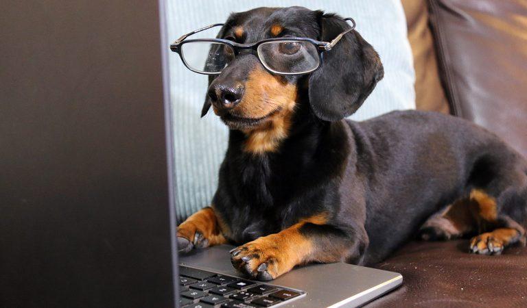 «QUERIDA HUMANA…»: La carta de un perro desde la casa de su cuidador canino