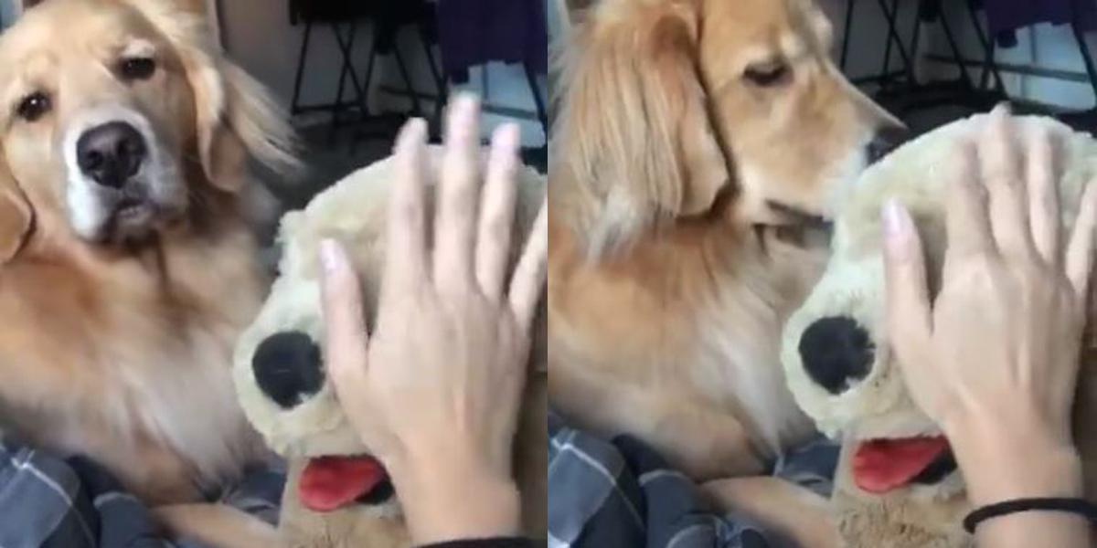 perros sienten celos