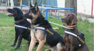 perros que detectan droga