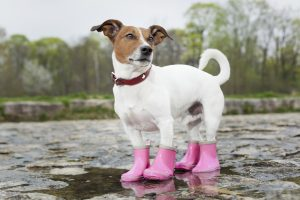 moda par perro botas