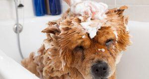 perros odian bañarse