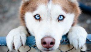 iva veterinario perro