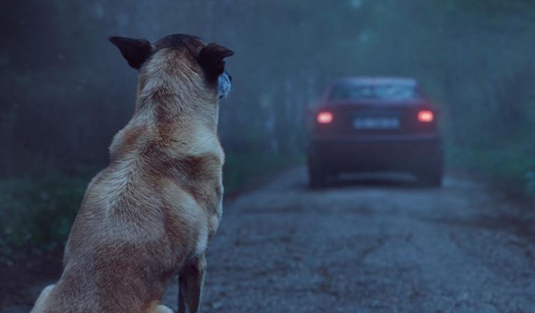 DÍA DEL PERRO CALLEJERO: ¿Conoces la campaña de Abandono 0 que ha ayudado a 11.000 mascotas?