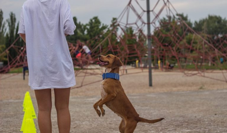 SNAUDAY: Primera gymkana para perros en el Día Mundial del Perro