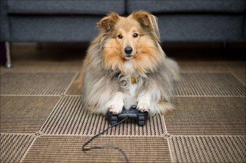 PERROS EN VIDEOJUEGOS: Conoce estos 8 personajes caninos en el Día Mundial del Gamer