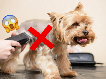 rapar a tu perro