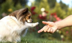 tu perro es zurdo o diestro
