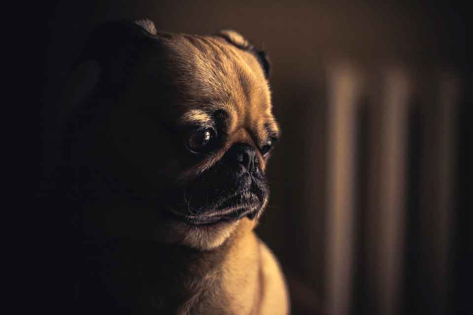 ansiedad miedo perro