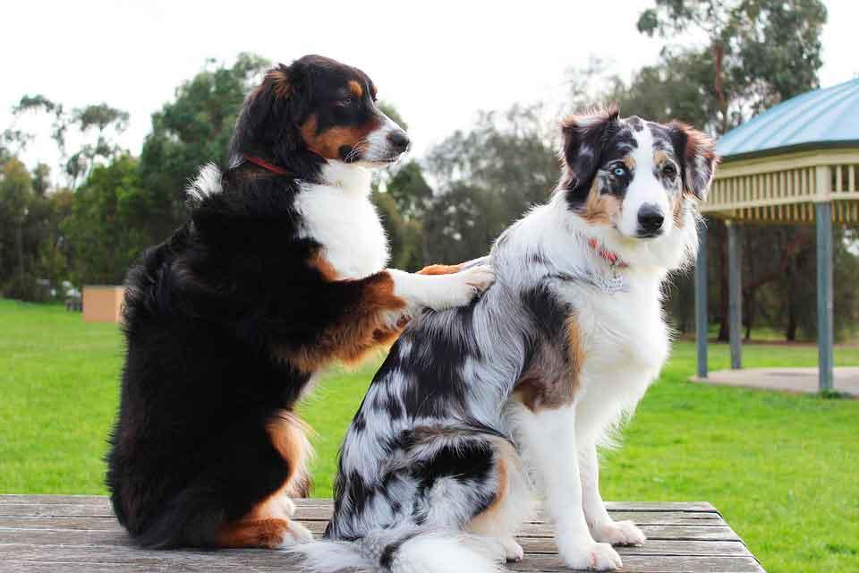 dos perros