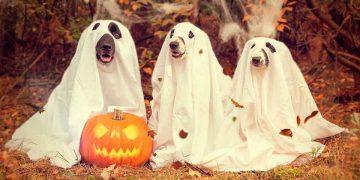 galletas halloween perros