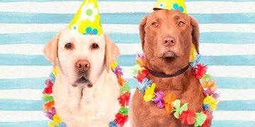 Perros de fiesta