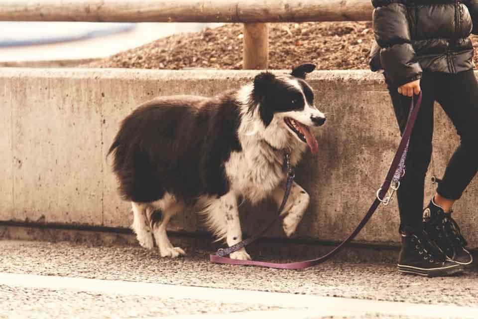 planes con perro en noviembre