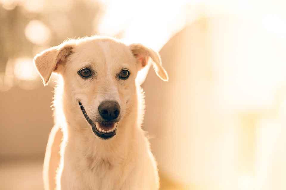 adoptar un perro mestizo