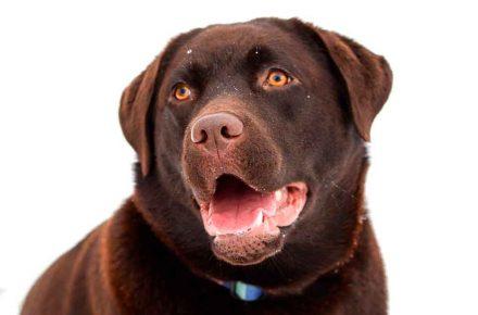 color de tu perro