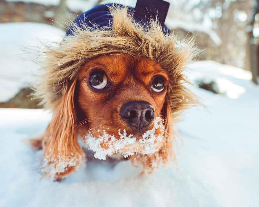 invierno perro alimentación