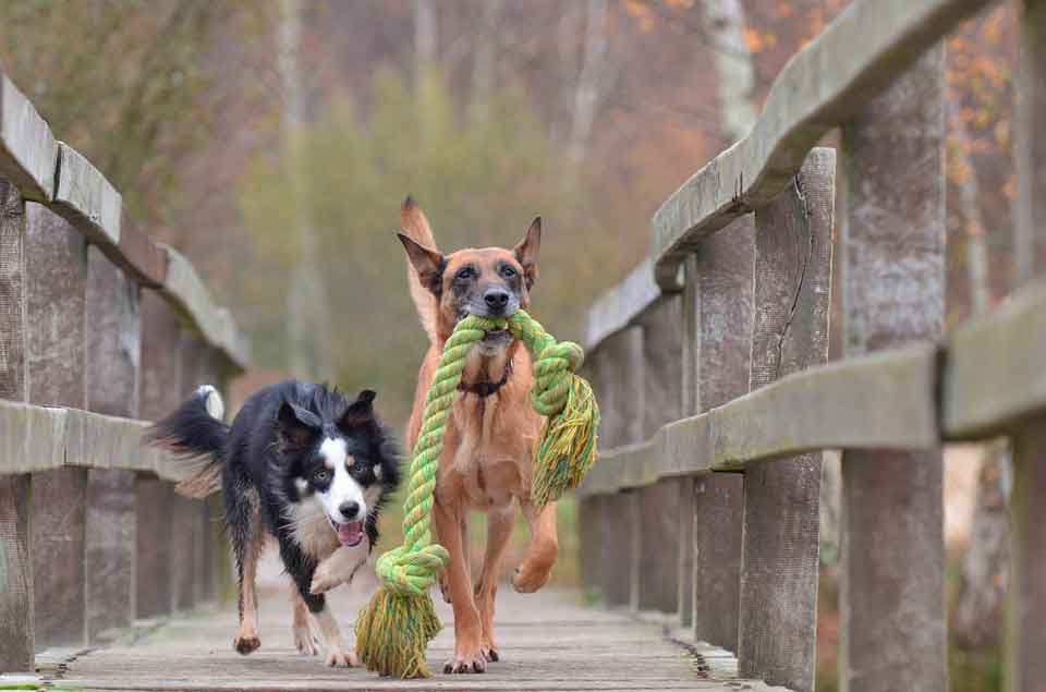 lugares dogfriendly
