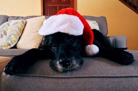 estrés perro navidad