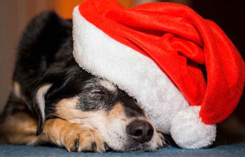regalos perros navidad