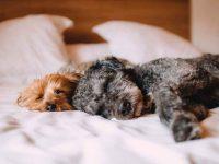 remedio casero para la diarrea de perros