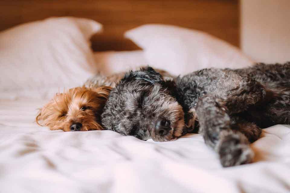 remedio casero para las diarreas de perros