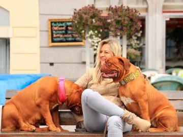 planes con perro