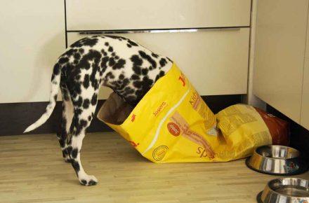 enfermedades alimentación perros