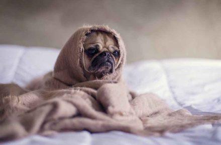 frio perro