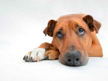 peluquería estrés perro